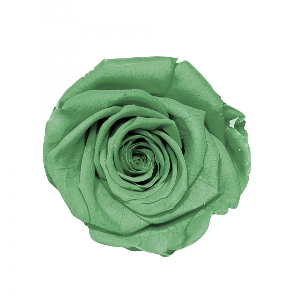 Grün Small Rosa - rund